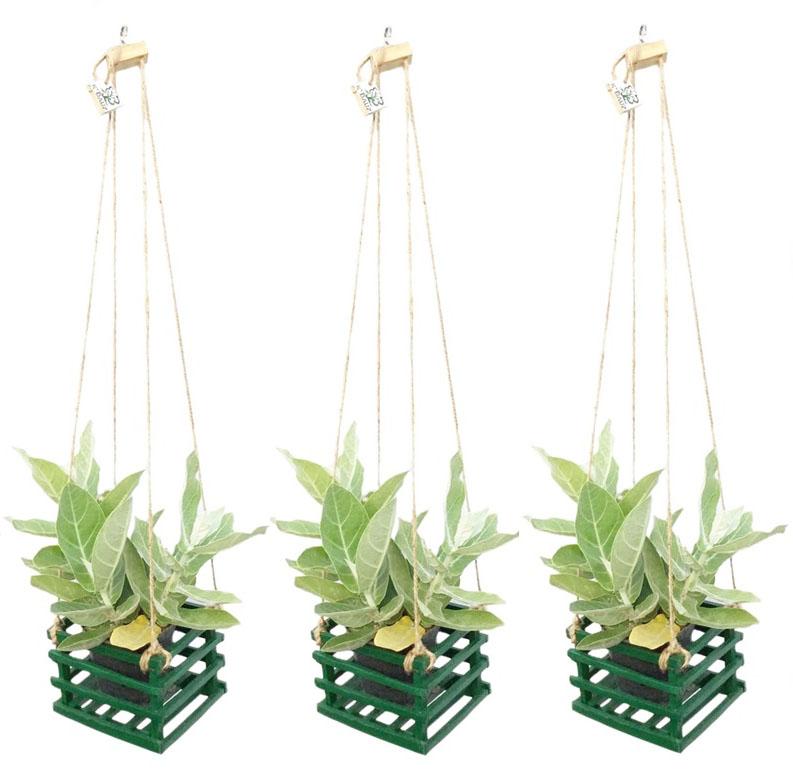 K'DAUZ Set of 3 ตะกร้าไม้แขวนต้นไม้