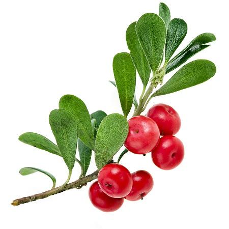สารสกัดจากธรรมชาติที่มีโครงสร้างคล้ายสาร Hydroquinone ได้มาจาก Bearberry, Cranberry, Mulberry, Blueberry และ Pear Alpha Arbutin มีลักษณะคล้ายกรดอะมิโน