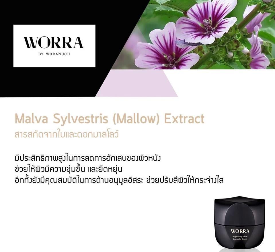 Malva Sylvestris (Mallow) Extract สารสกัดจากใบและดอกมาลโลว์ มีประสิทธิภาพสูงในการลดการอักเสบของผิวหนัง อีกทั้งยังช่วยให้ผิวมีความชุ่มชื้น และยืดหยุ่น อีกทั้งยังมีคุณสมบัติในการต้านอนุมูลอิสระ ช่วยปรับสีผิวให้กระจ่างใส