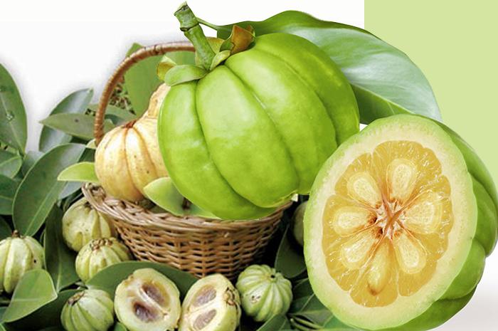 Garcenia extract การ์ซีเนียเอ็กซ์แทร็กซ์ สารสกัดจากส้มแขก ลดความอยากอาหาร ยับยั้งการสะสมไขมันส่วนเกิน ช่วยให้อิ่ม